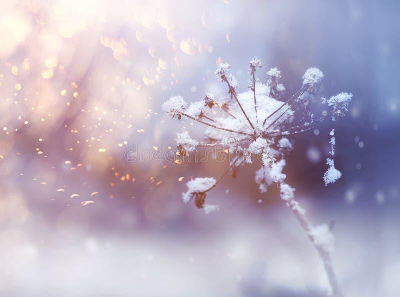 Brindille congelée de fleur dans le bel ackground de chutes de neige d'hiver images libres de droits