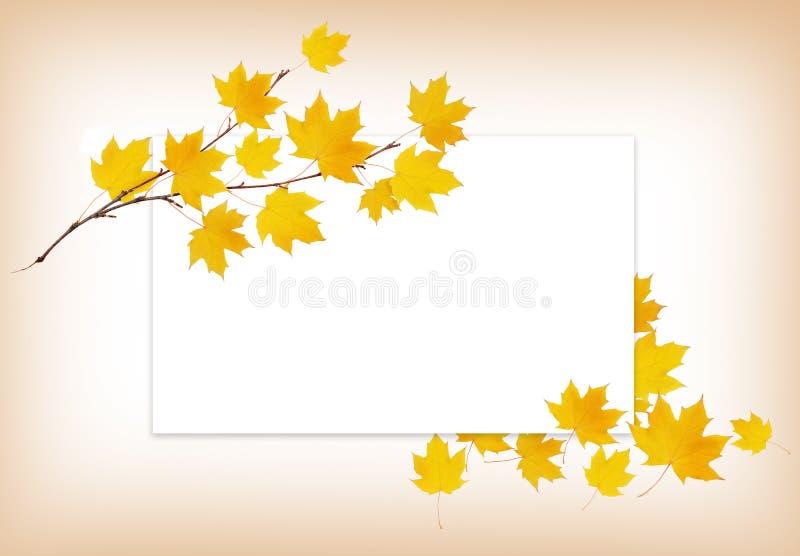 Brindille d'érable d'automne avec des feuilles de jaune et une carte blanche illustration libre de droits