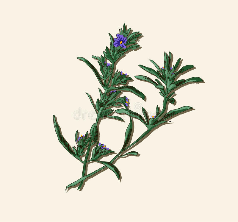 Brindille de Rosemary illustration libre de droits