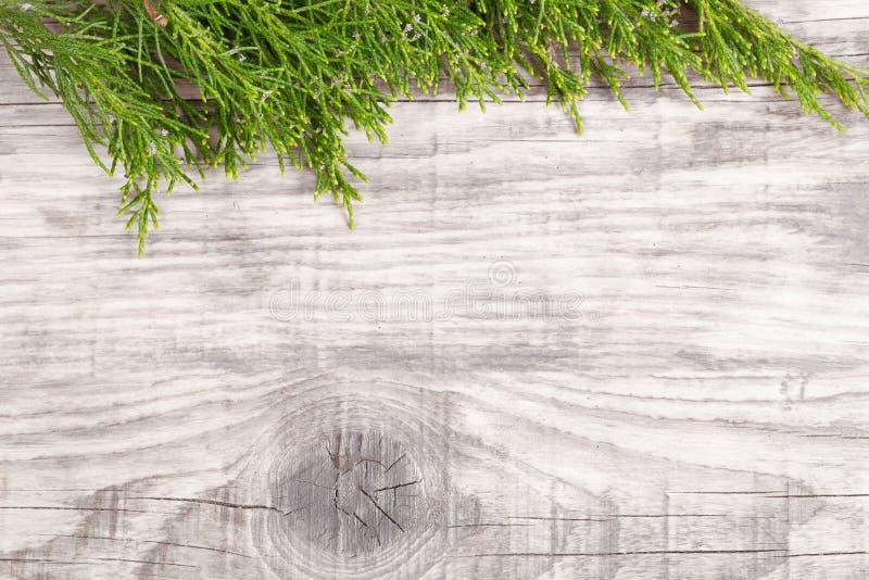 Brindille verte de genévrier sur le vieux conseil en bois gris image libre de droits
