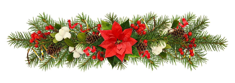 Brindilles à feuilles persistantes d'arbre de Noël, fleur de poinsettia, baies image libre de droits