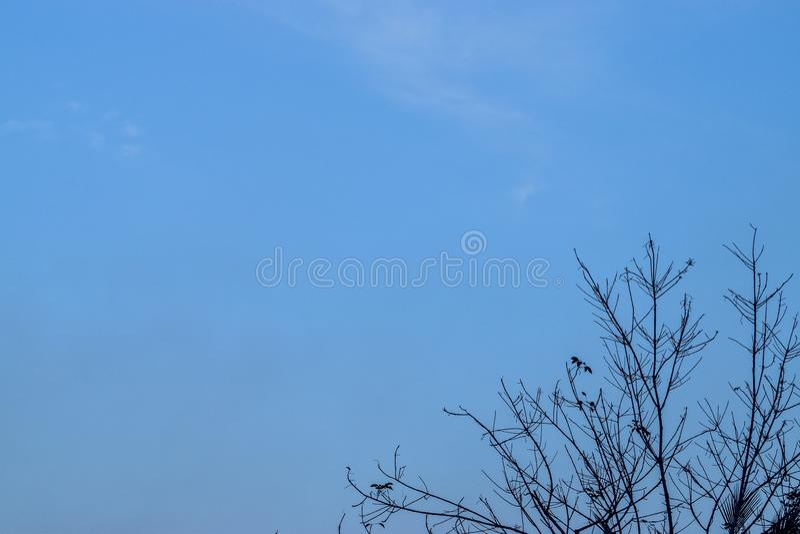 Brindilles avec le fond clair de ciel bleu, fond sec de ciel d'arbre images stock