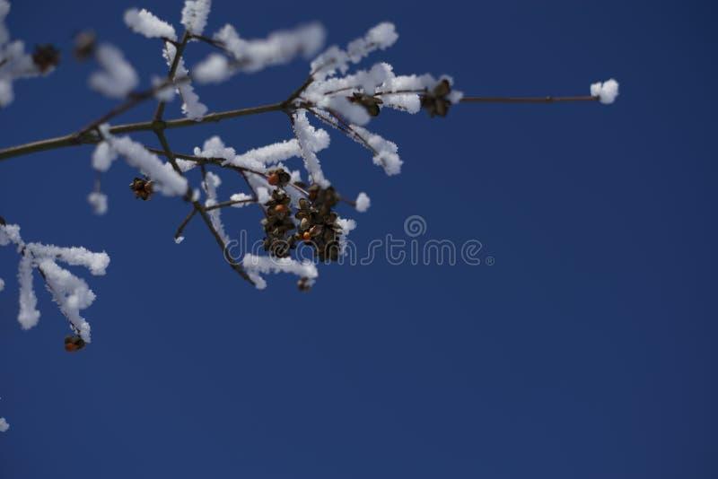 Brindilles cristallines images stock