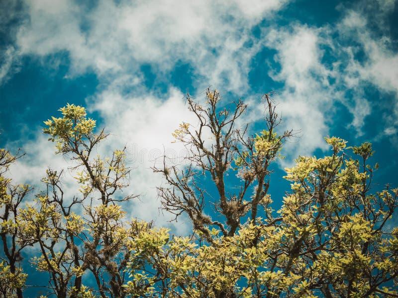 Brindilles d'un bel arbre image libre de droits
