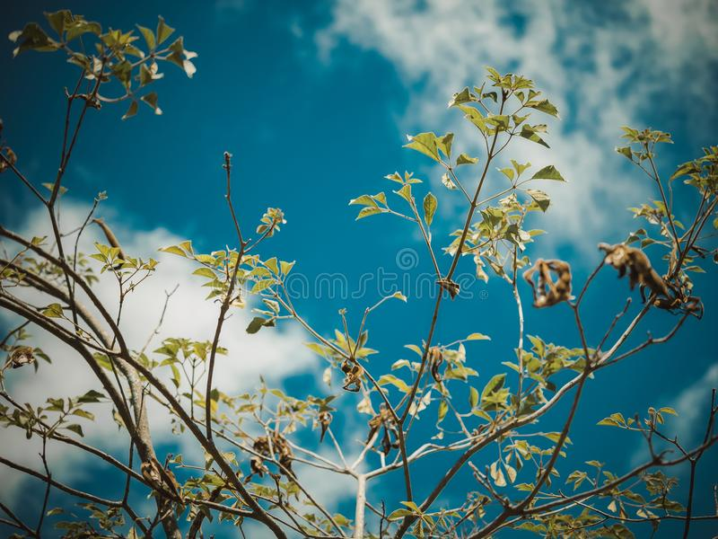 Brindilles d'un bel arbre photographie stock libre de droits