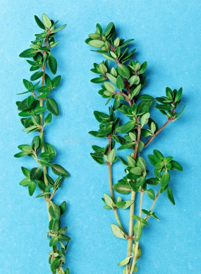 Brindilles vertes fraîches de thym sur le bleu photo libre de droits