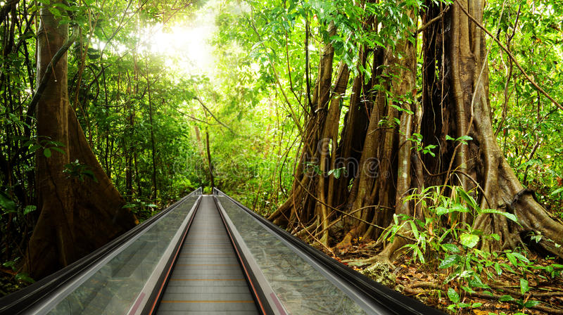 Bring rain forest to your business center stock images