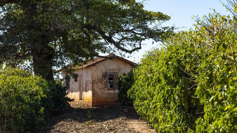Bringen Sie sehr einfaches und schlecht interessiert für einen schlechten Bauernhof in Brasilien unter stockfotografie