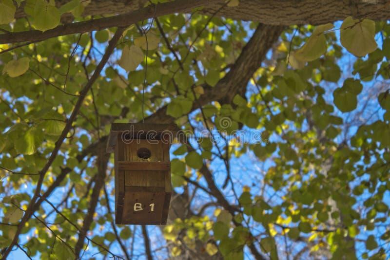 Bringen Sie Vögel in einem Baum voll von Blättern unter lizenzfreie stockbilder