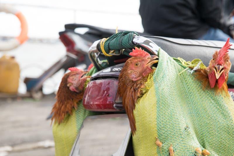 Chicken souvenirs on ferry to Saigon stock photos