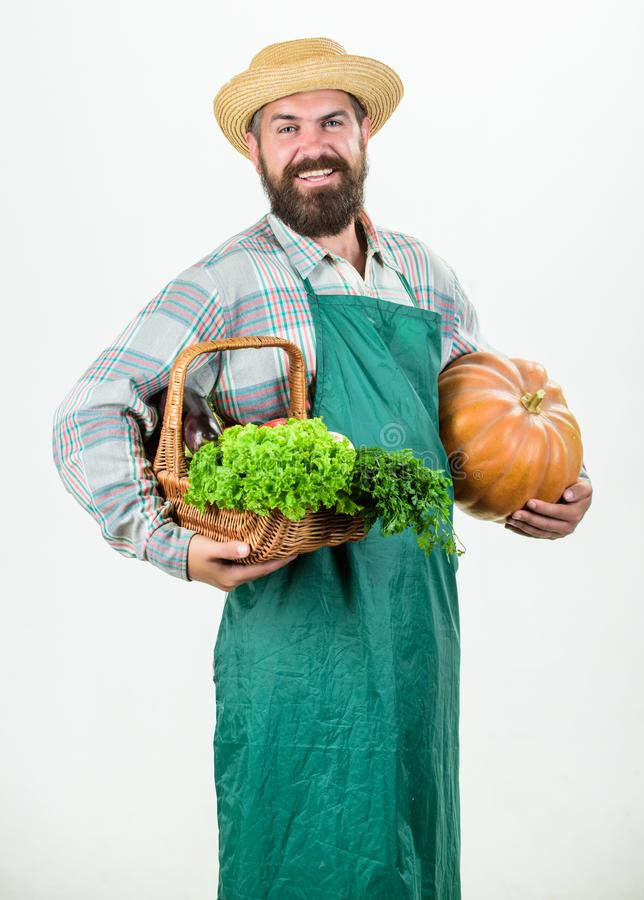 Bringing vegetables. man chef with rich autumn crop. bearded mature farmer. organic and natural food. happy halloween. Harvest festival. seasonal vitamin food royalty free stock image