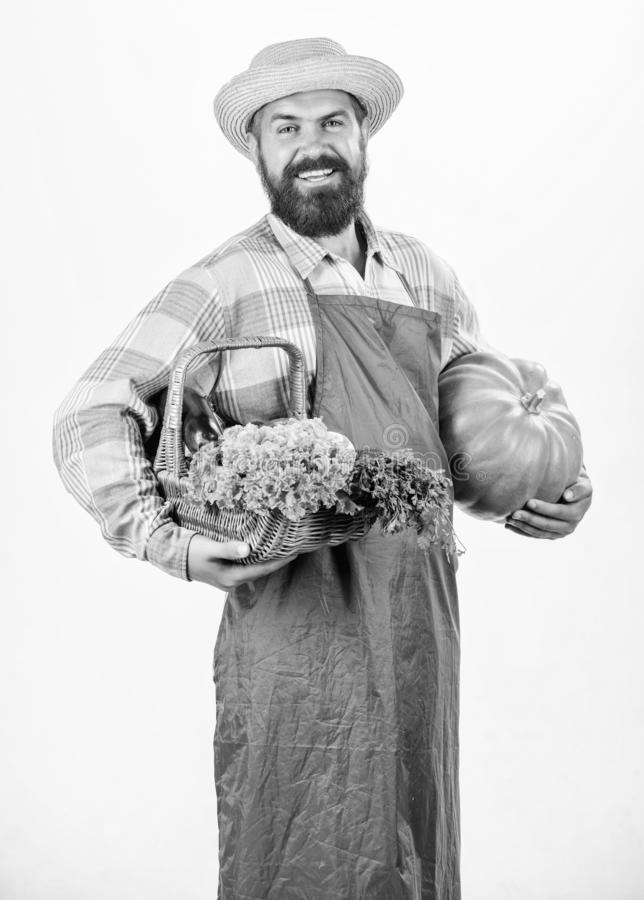 Bringing vegetables. man chef with rich autumn crop. bearded mature farmer. organic and natural food. happy halloween. Harvest festival. seasonal vitamin food stock photo