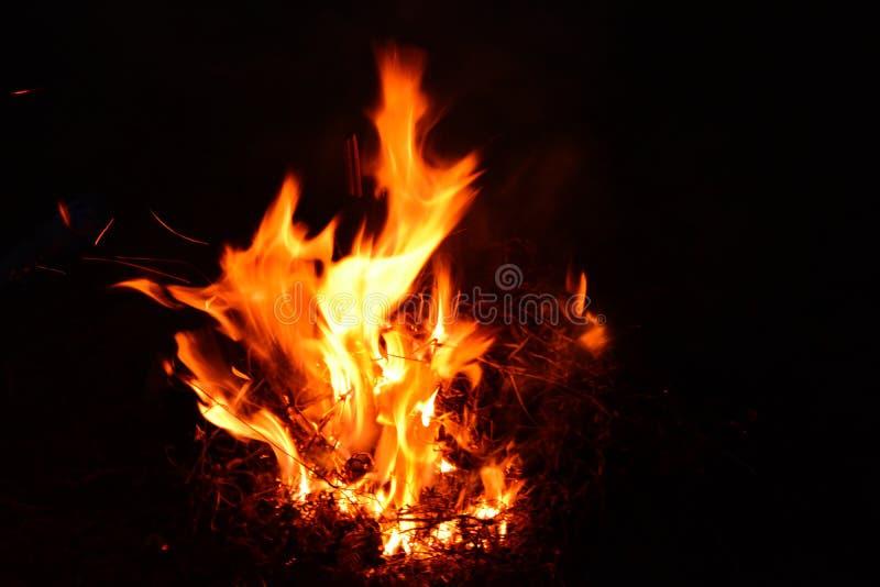 Brinnande Bush natt arkivbild