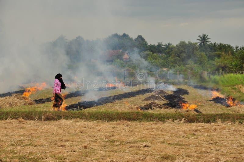 Brinnande risfält i Cambodja royaltyfri fotografi