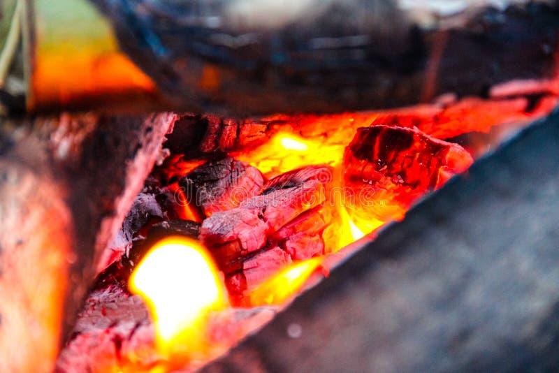 Brinnande tr? i branden arkivbilder