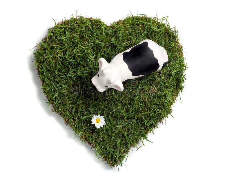 Brinque a flor da vaca e da margarida em gramado heart-shaped foto de stock