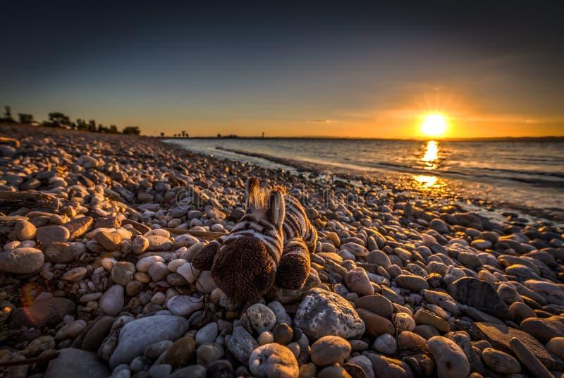 Brinquedo da zebra que encontra-se nas rochas na praia com por do sol sobre o lago Neusiedler em Podersdorf imagens de stock royalty free
