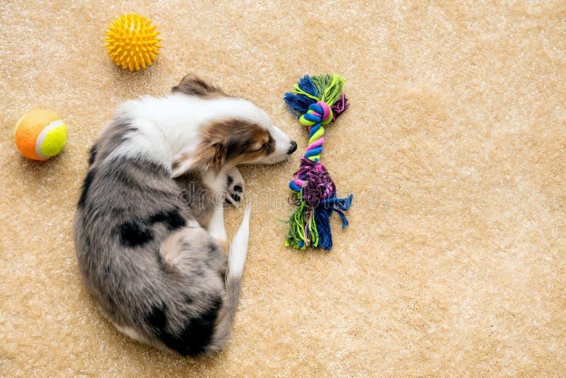 Brinquedos de Flatlay, de cachorrinho e de cão que encontram-se em um assoalho marrom, copyspace fotografia de stock