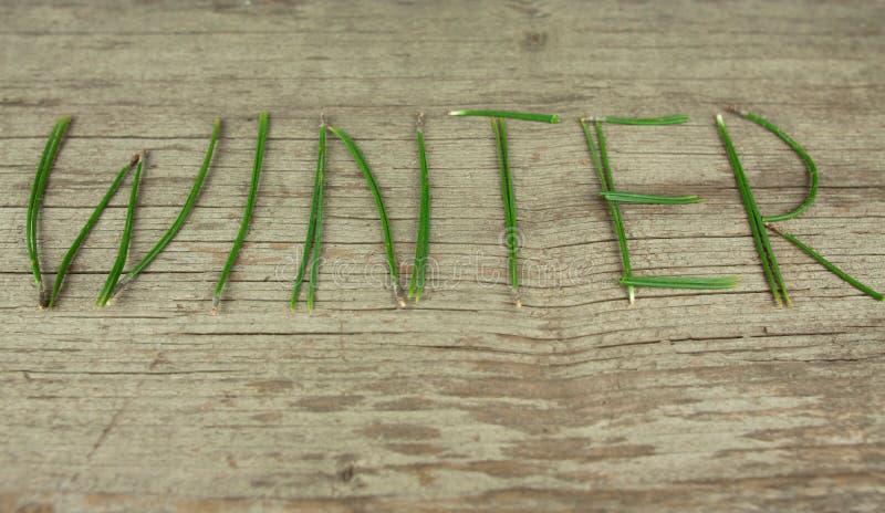 Brins à feuilles persistantes d'hiver sur le conseil en bois rustique photos libres de droits