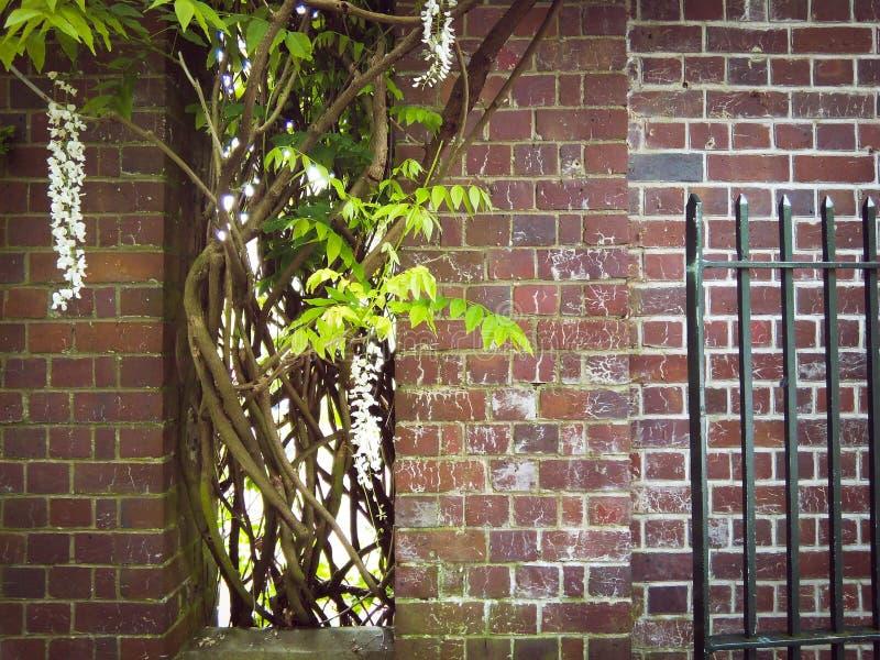 Briques et usines photo stock