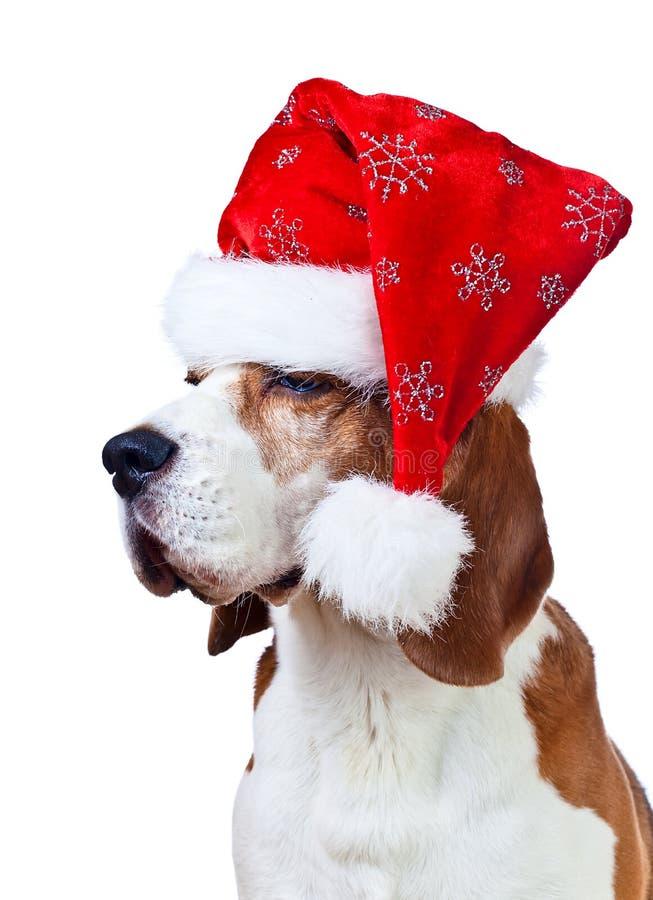 Briquet dans le chapeau de Santa d'isolement sur le blanc photos libres de droits