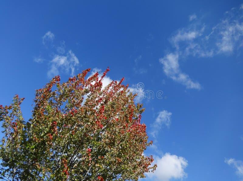 Bris till och med nedgång-färgat träd royaltyfri fotografi