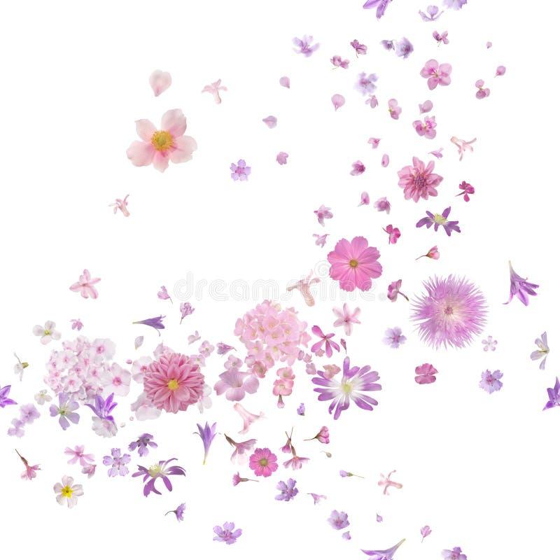 Brisa cor-de-rosa das flores em botão da flor fotos de stock
