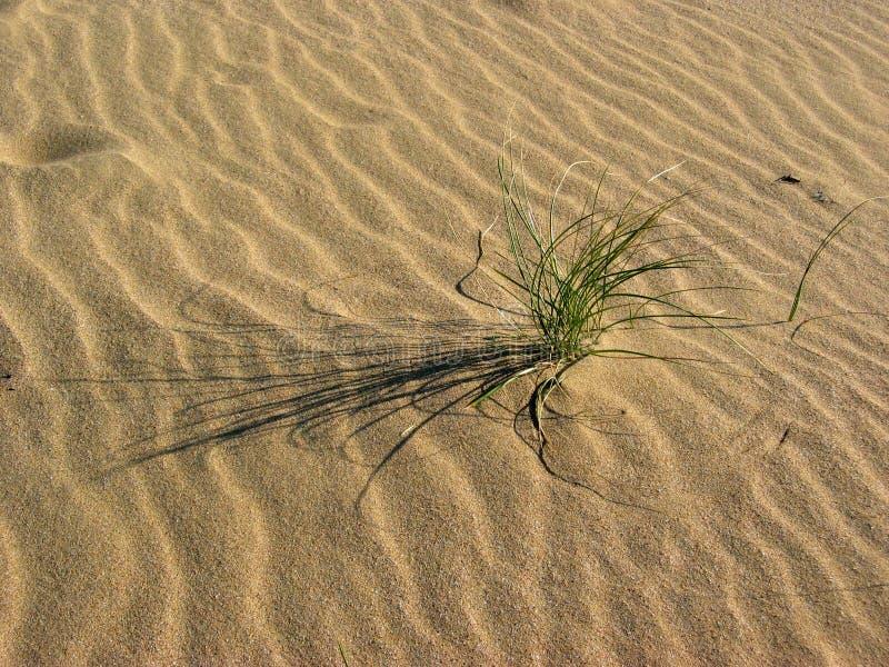 Download Brise photo stock. Image du sunlight, paix, brise, sable - 60034