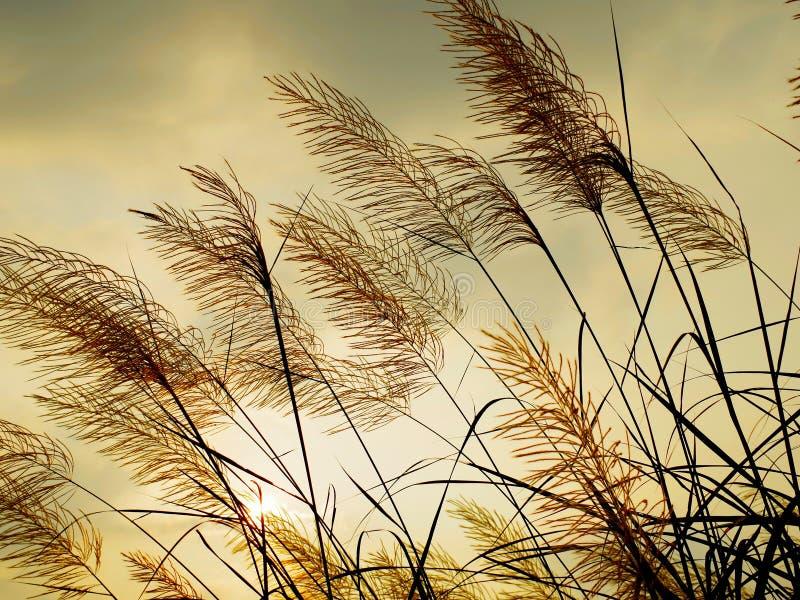 Brise, die das Gras beeinflußt lizenzfreie stockfotografie