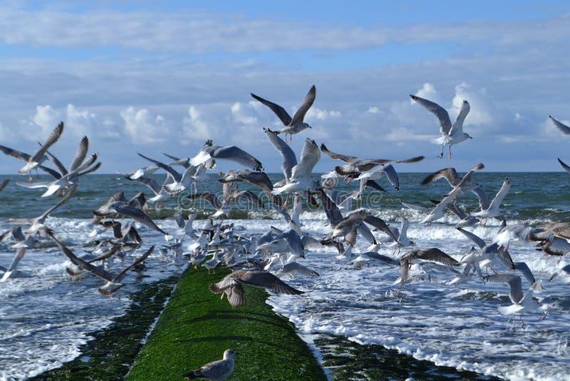 Brise-lames dans le Néerlandais Northsea avec des mouettes image stock