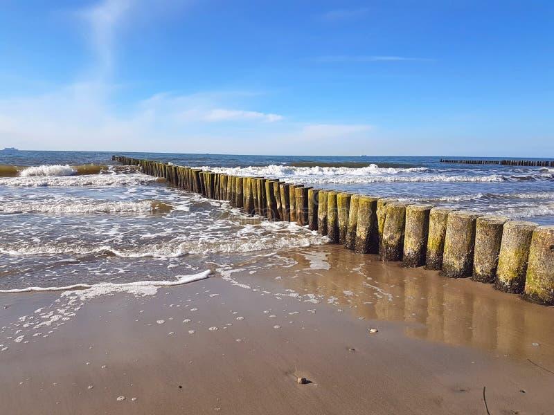 Brise-lames en bois ( ; groynes) ; dans la côte baltique photo stock