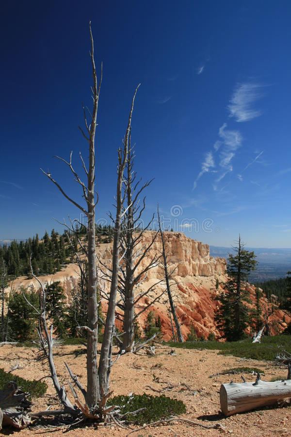 Free Bristlecone Loop Bryce Canyon 5 Royalty Free Stock Images - 27223529