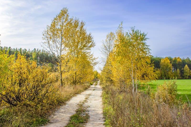 Bristningen av höstfärger längs en tyst landsväg, mot den blåa och vita himlen royaltyfria foton