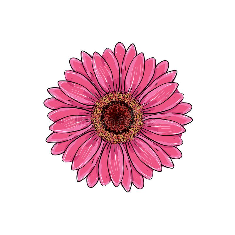 Brite pink magenta color with black and white line gerbera flower isolated. Hand-drawn contour lines and strokes. Vector flower royalty free stock image