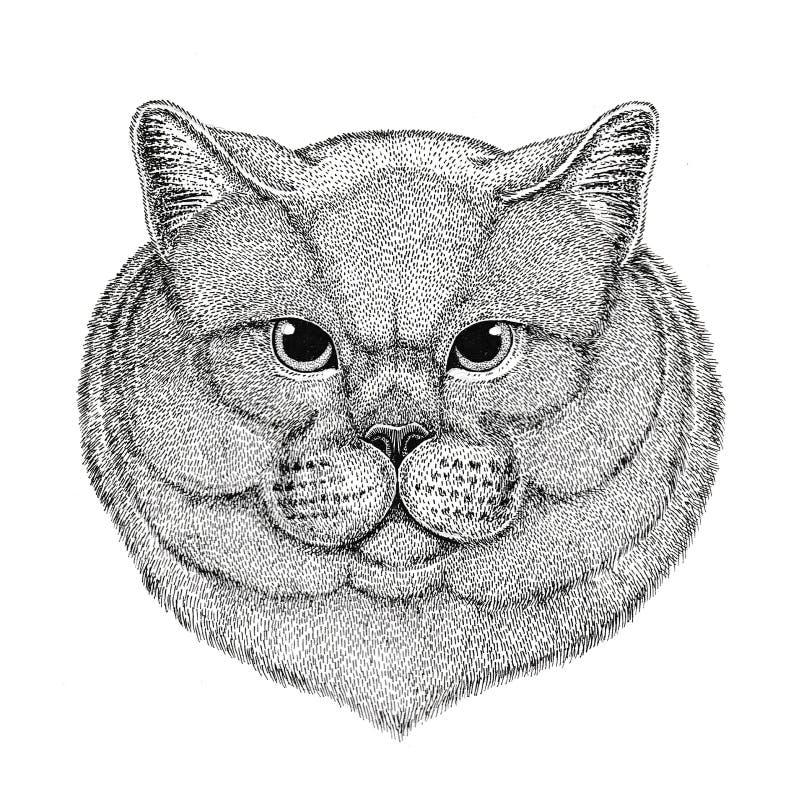 Brithish kota szlachetna Męska ręka rysująca ilustracja dla tatuażu, emblemat, odznaka, logo, łata Odizolowywająca na białym tle ilustracja wektor