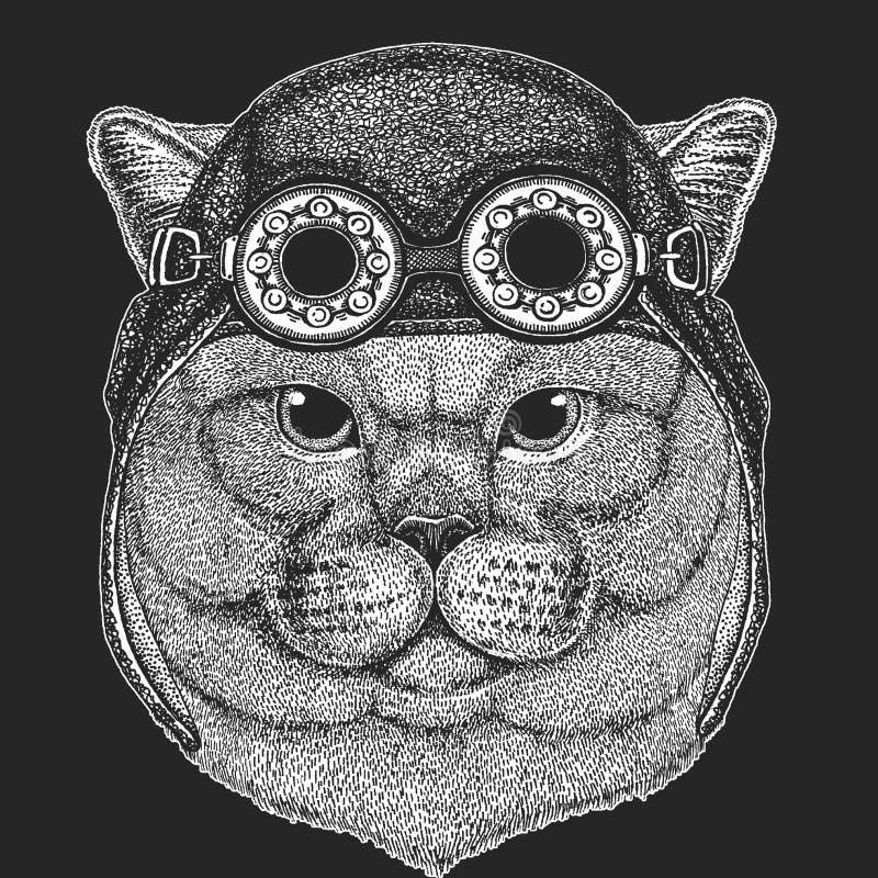 Brithish kota szlachetna Męska ręka rysujący wizerunek dla tatuażu, emblemat, odznaka, logo, łata Chłodno zwierzęcego jest ubrany ilustracja wektor