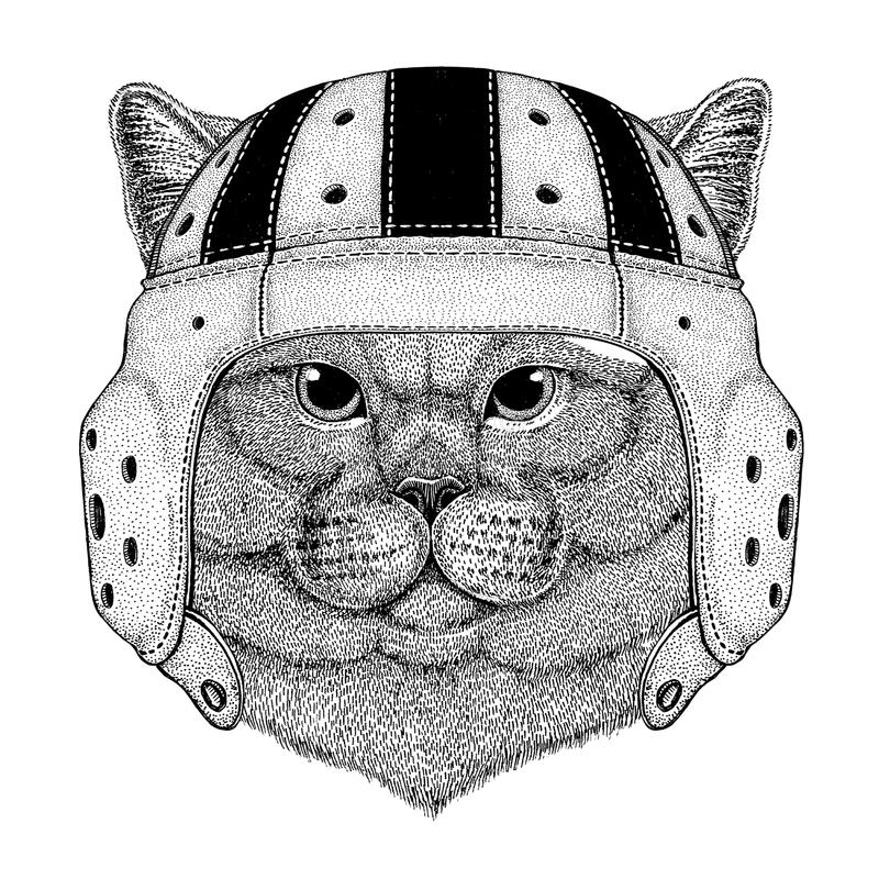 Brithish szlachetnego kota Męski dzikie zwierzę jest ubranym rugby hełma sporta ilustrację ilustracja wektor