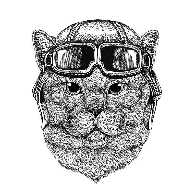 Brithish szlachetny kot jest ubranym rzemiennego hełma lotnika, rowerzysta, motocykl ręka rysująca ilustracja dla tatuażu, emblem royalty ilustracja