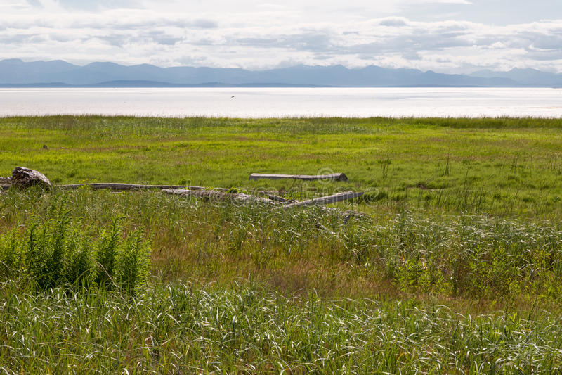 Britisch-Columbia-Sumpf lizenzfreie stockfotos