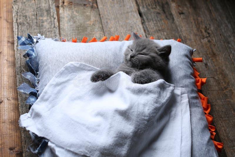 Britisch Kurzhaar-Kätzchen, das auf einem Kissen, hölzerner Hintergrund schläft lizenzfreies stockfoto