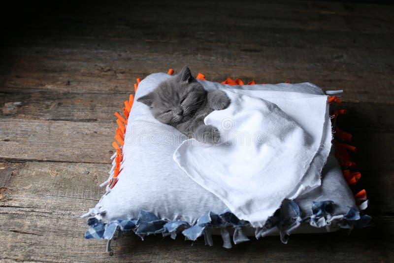 Britisch Kurzhaar-Kätzchen, das auf einem Kissen, hölzerner Hintergrund schläft stockfotografie