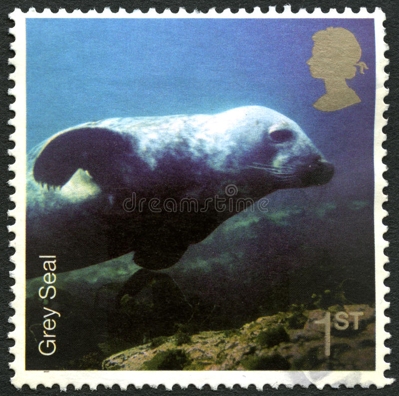 BRITISCHE Briefmarke Grey Seals lizenzfreie stockfotos