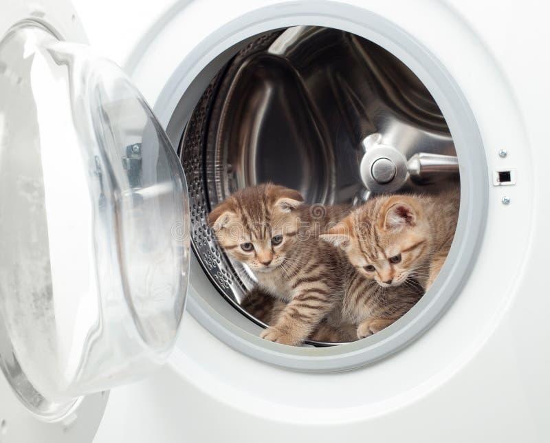 Britische Kätzchen der getigerten Katze innerhalb der Wäschereiwaschmaschine stockfoto