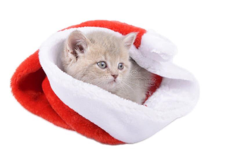 Britische Katze in einem roten Santa& x27; s-Kappe auf weißem Hintergrund lizenzfreies stockfoto