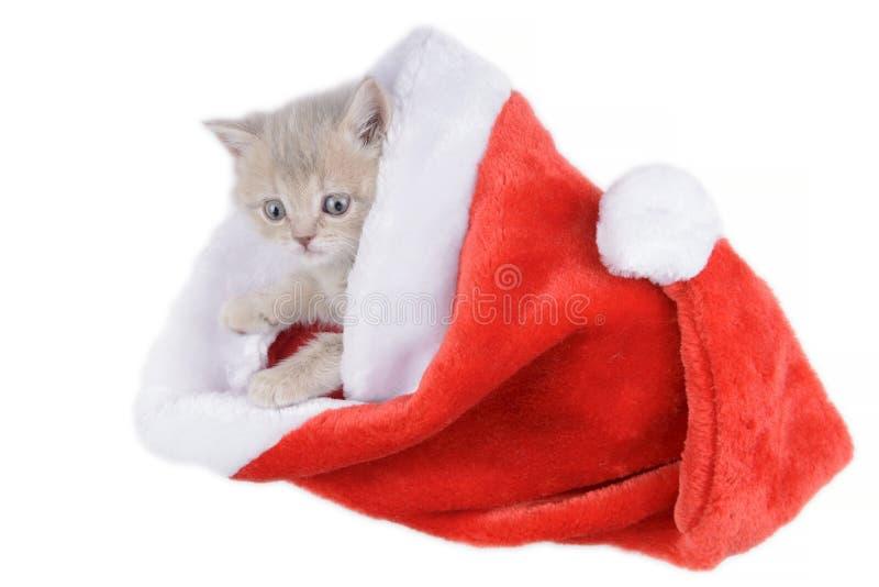 Britische Katze in einem roten Santa& x27; s-Kappe auf weißem Hintergrund stockfotografie