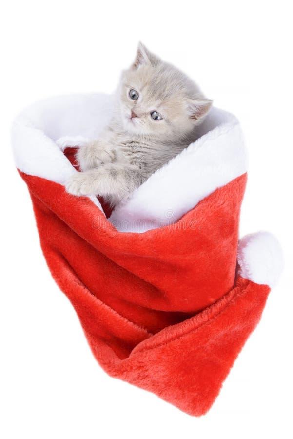 Britische Katze in einem roten Santa& x27; s-Kappe auf weißem Hintergrund lizenzfreie stockfotos