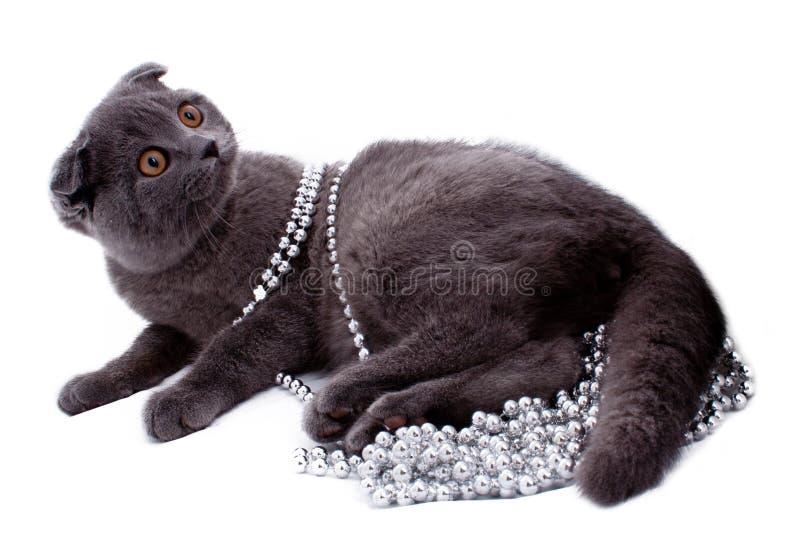 Britische Shorthair Katze lizenzfreie stockfotografie
