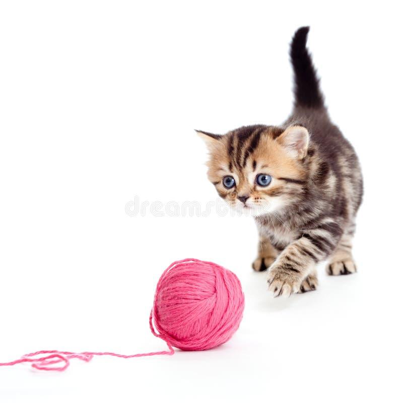 Britisches Kätzchen des Tabby, welches die rote Schlaufe getrennt spielt lizenzfreie stockfotos