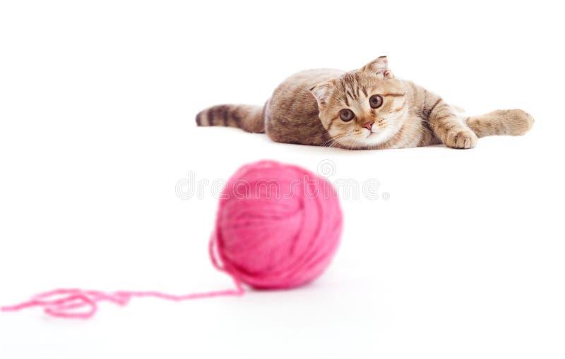 Britisches Kätzchen des Tabby, welches die rote Schlaufe getrennt spielt stockbilder