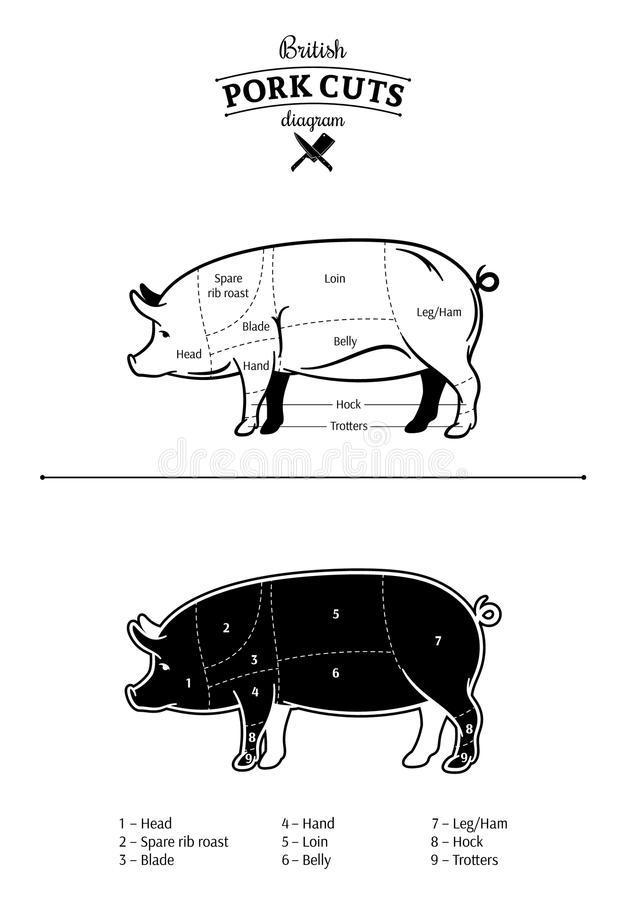 Britisches Schweinefleisch-Schnitt-Diagramm Vektor Abbildung ...